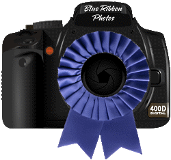 Blue Ribbon Photo Contest