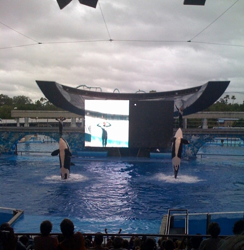 Shamu and Friends!