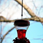 hummingbird feeder outside