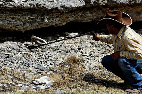 rattlesnake grabbing