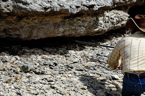 Grabbing rattlesnake