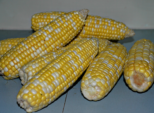 Bunchof Corn Cobs