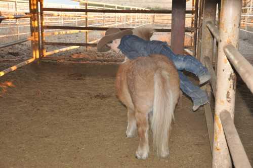 bareback cowboy