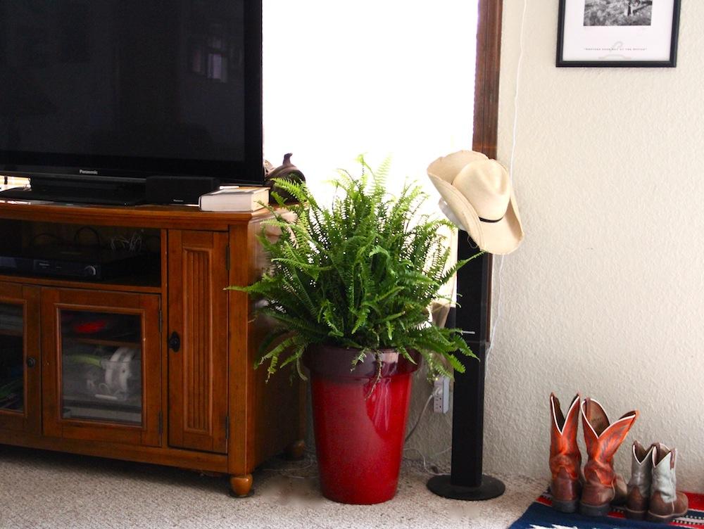 bhg planter