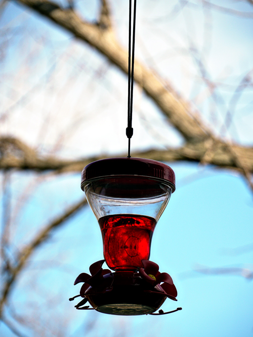 hummingbird feeder outside
