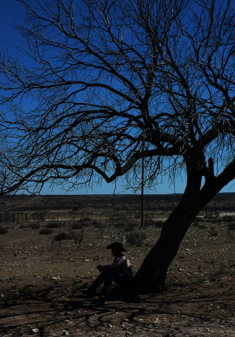 tyler-shade-tree.jpg