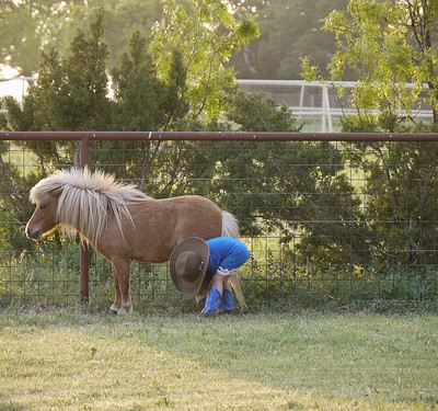 Cowpoke Underpants, The Horse Whisperer