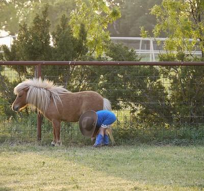 Cowpoke Underpants, The Horse Whisperer