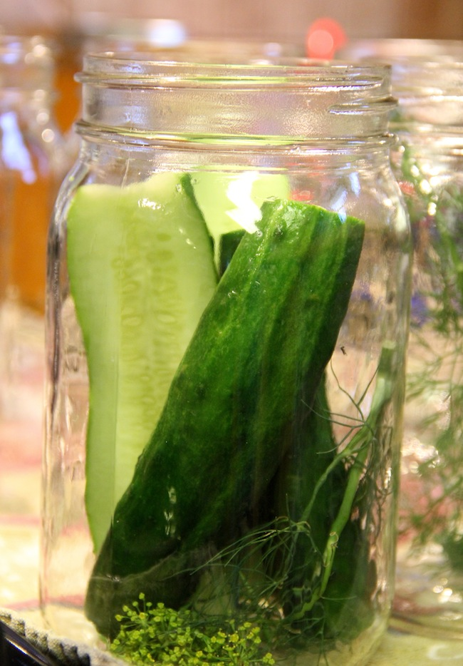 canning dill pickles