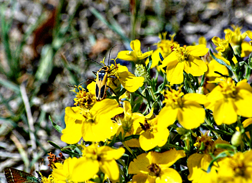 Yellow flowers with bees